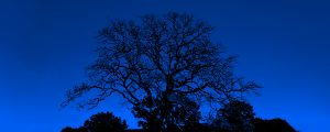 Live Events Stock Media - Tree 1 - Blue