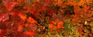 Live Events Stock Media - Fall Colors 1003