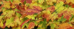 Live Events Stock Media - Autumn Leaves at Cut River Loop