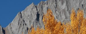 Live Events Stock Media - Autumn Trees and Mountains