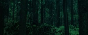 Live Events Stock Media - Dark Green Forest