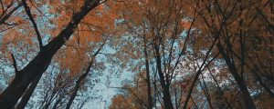 Live Events Stock Media - Fall Leaves 07