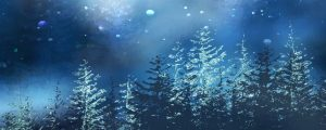 Live Events Stock Media - Christmas Woods 02