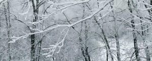 Live Events Stock Media - Snow on bare branches