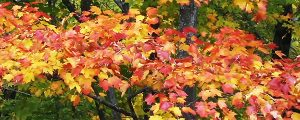 Live Events Stock Media - Breezy Fall Color Loop