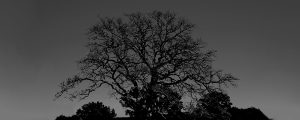 Live Events Stock Media - Tree 1 - BW