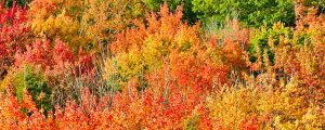 Live Events Stock Media - Autumn Leaves at Cut River