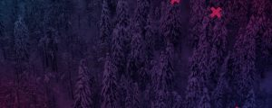 Live Events Stock Media - Dense Snowy Forest Crosses