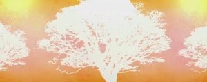 Live Events Stock Media - Tree of Life Orange 02