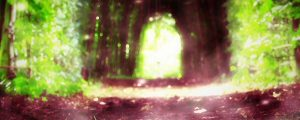 Live Events Stock Media - Silent Forest Canopy