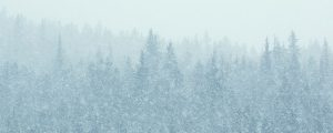 Live Events Stock Media - Snow Falling in the Forest