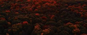 Live Events Stock Media - Autumn Aerials 10