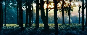 Live Events Stock Media - Sunlight Through Forest Trees 5