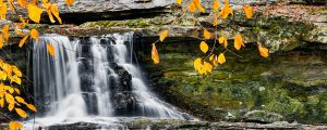 Live Events Stock Media - Waterfall and Golden Leaves