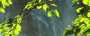 Live Events Stock Media - Leaves and Waterfall