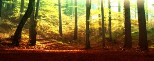 Live Events Stock Media - Sunlight Through Forest Trees 7
