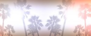 Live Events Stock Media - Palm Trees Still 4