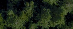Live Events Stock Media - Forest Expanse Still
