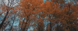 Live Events Stock Media - Fall Leaves 09