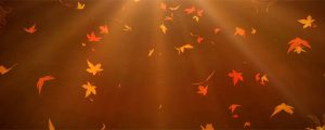 Live Events Stock Media - Autumn Leaves