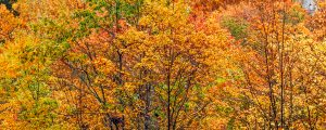 Live Events Stock Media - Autumn Foliage