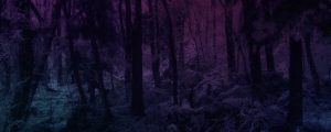 Live Events Stock Media - Warm Pink Snowy Forest Color