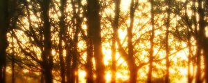 Live Events Stock Media - Sunlight Through Forest Trees 1