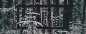 Live Events Stock Media - Winter Forest Remix 09