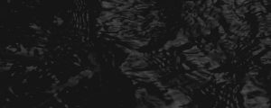 Live Events Stock Media - Bayou (Black and White)