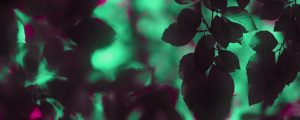 Live Events Stock Media - Teal and Pink DOF Leaves Neon