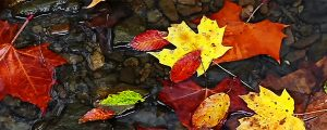 Live Events Stock Media - Fall Leaves and Trickling Water Loop