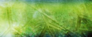 Live Events Stock Media - Palm Sunday: Texture