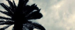 Live Events Stock Media - Palm Tree Silhouette
