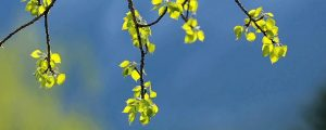 Live Events Stock Media - New Spring Leaves 2