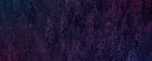 Live Events Stock Media - Dense Snowy Forest Shapes