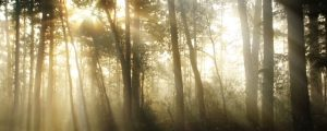 Live Events Stock Media - Sunny Foggy Forest in The Morning 02