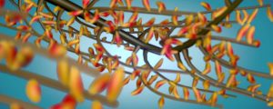 Live Events Stock Media - 3d Yellow & Orange Leaves